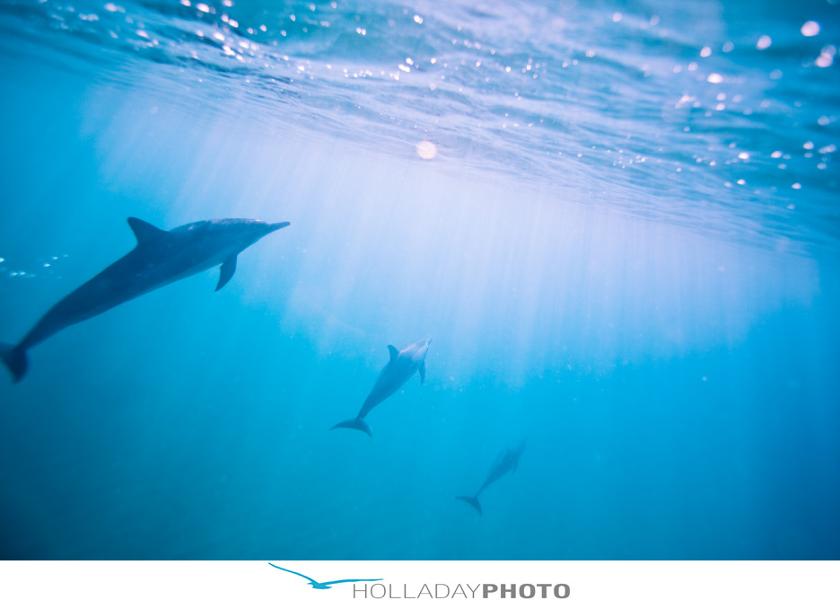 dolphins-hawaii-photography-1