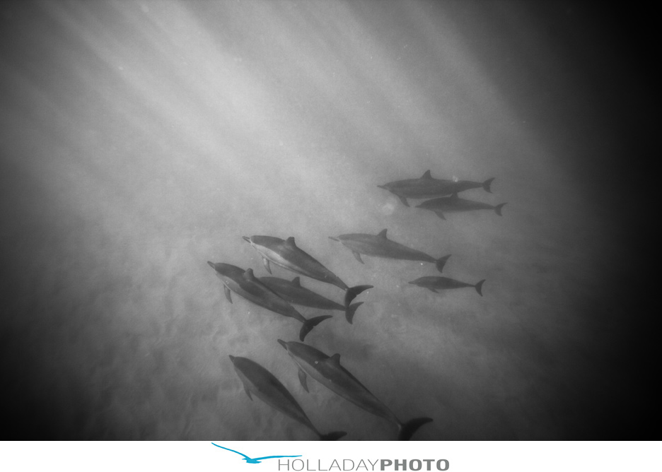 hawaii-dolphin-photography-1